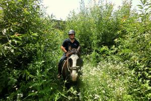 Te paard door de hertengangen