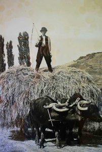 kis-balaton-buffelreservaat-kapolnapuszta-04