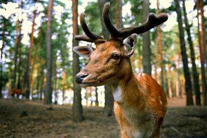 bükk nationale park hongarije 09